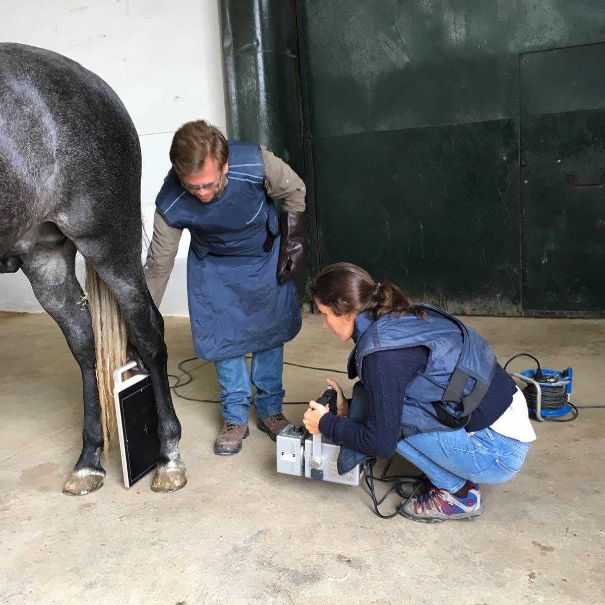 Serviços veterinários para Portugal e Espanha. Especializado em cavalos.